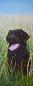 Portret van mijn bruine labrador Bo, in een graanveld