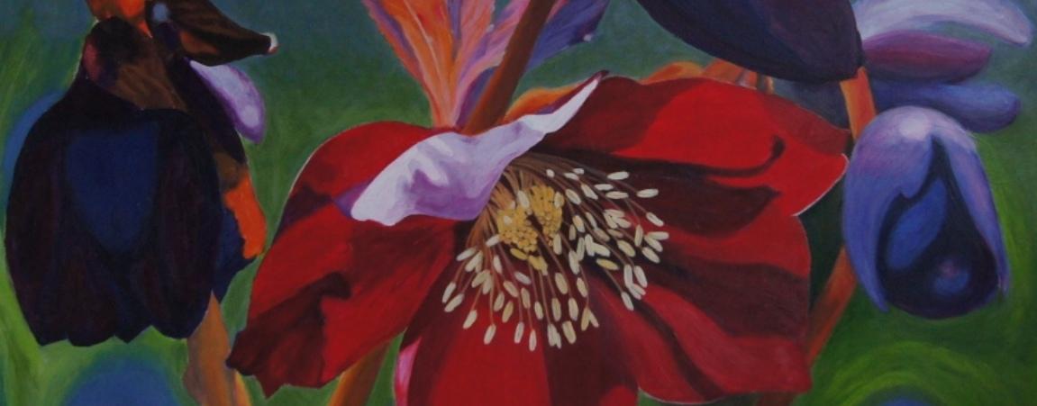 'Helleborus Oriëntalis'