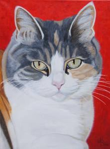 Portret van poes 'Sissi', met een rode achtergrond